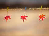 Fallen leaves hanging the rope Photographic Print by JongBeom Kim