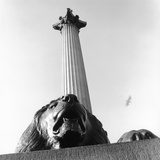 Nelson's Column with Lion Sculpture Photographic Print by Manuela Höfer