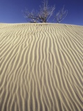 Farwell Canyon Sand Dune, British Columbia, Canada. Photographic Print by Chris Harris