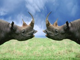 Rhinoceroses Looking at Each Other Photographic Print by Tim Davis