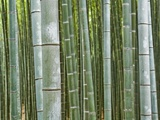 Bamboo Forest in Sagano Photographic Print by Rudy Sulgan