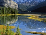 Mount Kitchener Reflected in Pond Near the Beauty Creek Hostel, Jasper National Park, Alberta, Cana Photographic Print by Darwin Wiggett