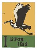 I is for ibis Giclee Print