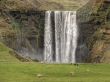 Skogarfoss with grazing sheep Photographic Print