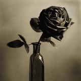 Still Life of a Rose in a Bottle Photographic Print by Tom Marks