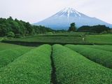 Mt. Fuji from tea plantation, Fujinomiya city, Shizuoka prefecture, Japan Photographic Print