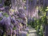 Frühlingsgarten Fotodruck