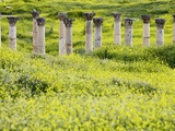 Roman columns rising above field of wildflowers Photographic Print by O. and E. Alamany and Vicens