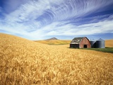 Wheat Field Surrounding Barn Lmina fotogrfica por Craig Tuttle