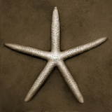 White Starfish Photographic Print by John Kuss