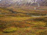 Fall colors on the tundra in Denali National Park Photographic Print by John Eastcott & Yva Momatiuk