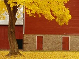 Autumn Tree by Red Barn Photographic Print by Bob Krist