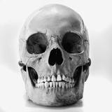 Human skull Photographic Print by Joe Clark