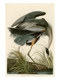 Kanadareiher Giclée-Druck von John James Audubon