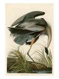 Great Blue Heron Lámina giclée por John James Audubon