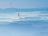 Birds flying above foggy mountains Photographic Print by Yi Lu