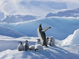 Emperor Penguin Parent and Chicks on Small Ice Mound Photographie par Keren Su