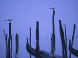 Gondolas in Venice Photographic Print by Bruno Ehrs