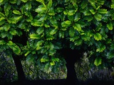 Lush Green Trees in Chiang Mai in Thailand Photographic Print by Bruno Ehrs