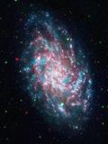 Triangulum Galaxy Photographic Print