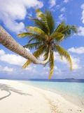Coconut Palm Tree by the Beach and Lagoon Fotografie-Druck von Frank Lukasseck
