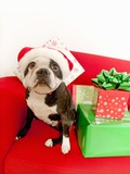 Dog wearing Santa Claus hat next to gifts Photographic Print