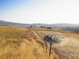 Herd of Sheep Photographic Print by Morgan David de Lossy