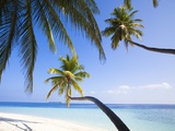 Coconut palm trees shading the beach and lagoon Photographic Print by Frank Lukasseck