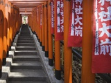 Line of torii gates at Hie Shrine Photographic Print by Jonathan Hicks