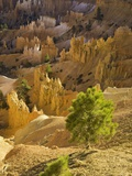 Sandstone hoodoos seen from Sunset Point in Bryce Canyon National Park Photographic Print by John Eastcott &amp; Yva Momatiuk