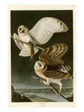 Barn Owl Giclee Print by John James Audubon