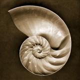 Half Nautilus Fotografisk tryk af John Kuss