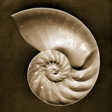 Half Nautilus Photographic Print by John Kuss