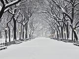 Central Park på vintern Fotoprint av Rudy Sulgan