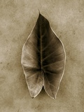 Elephant Ear Photographic Print by John Kuss