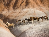 Herd of horses in foothills Photographic Print by Frank Lukasseck
