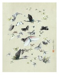 Drawing of butterflies and moths attributed to Settso Giclee Print
