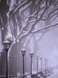 Central Park in winter Photographic Print by Gildo Nicolo Spadoni