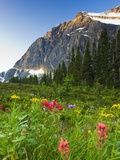 Wildflowers in Cavell Meadows with View of Mount Edith Cavell, Jasper National Park, Alberta, Canad Photographic Print by Scott Dimond