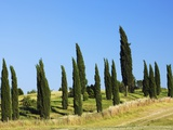 Cypress trees by a country lane Photographic Print by Frank Krahmer