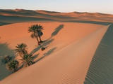 Date palms in a dune near Lake Maflu Photographic Print by Frank Krahmer