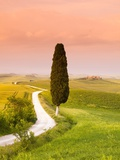 Cypress Tree by Dirt Road at Sunset Photographic Print by Frank Lukasseck