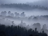 Rothiemurchus Forest in Cairngorms National Park Photographic Print by Andrew Parkinson
