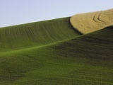 Green and yellow wheat fields in the Palouse Hills of Washington Photographic Print by John Eastcott & Yva Momatiuk