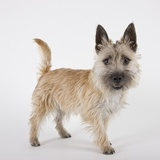 Terrier Photographic Print by Michael Kloth