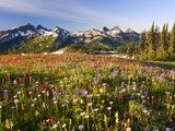 Tatoosh range behind wildflowers in field Photographic Print by Craig Tuttle