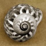 Tiger Snail Photographie par John Kuss