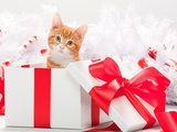 Kitten in christmas gift box Photographic Print