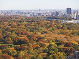 Autumn foliage, Central Park, New York City Photographic Print