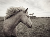 Horses in Field Photographic Print by Angela Drury